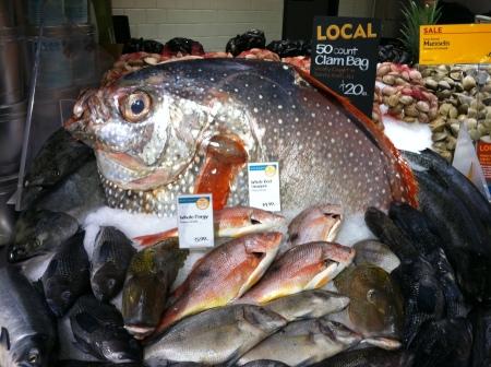 Day 180 - Giganthor Fish